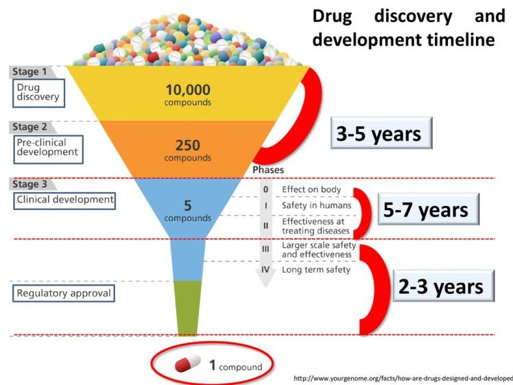3-5+years+5-7+years+2-3+years+Drug+discovery+and+development+timeline