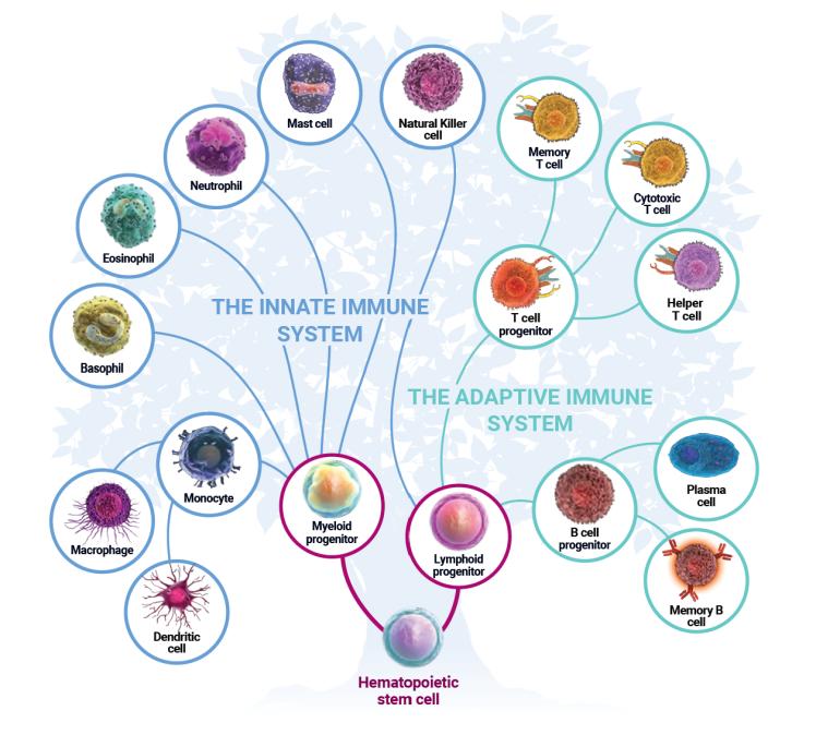 Cell_Immune